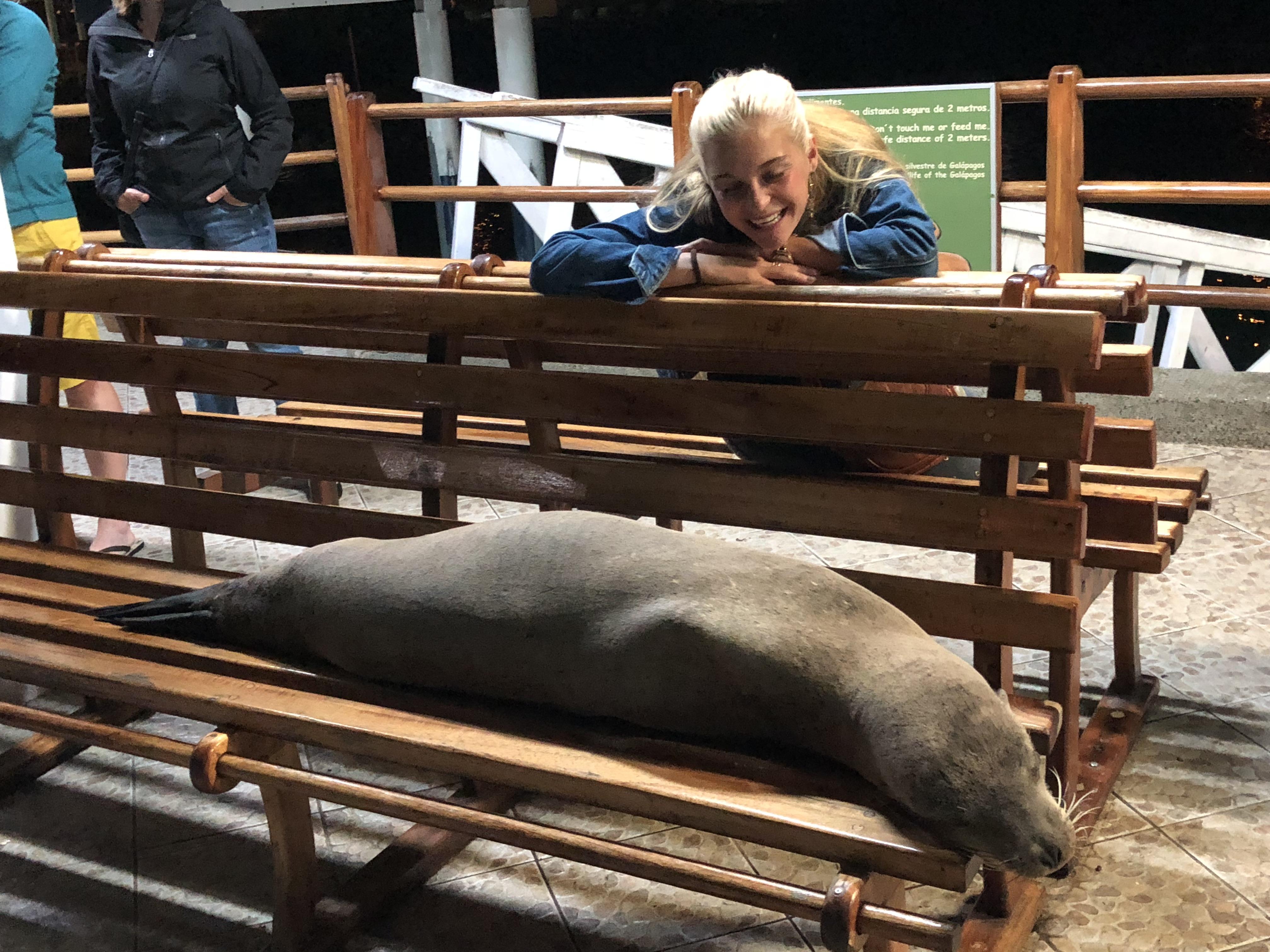 Seehund auf Bank